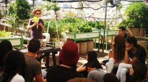 Israelisches Kaufhaus-Dach überrascht mit Gemüseanbau, Imkerei, Biotop und Bio-Workshops –NewsGreen